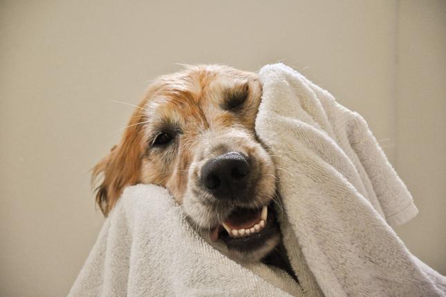 Dog-Grooming-Los-Angeles